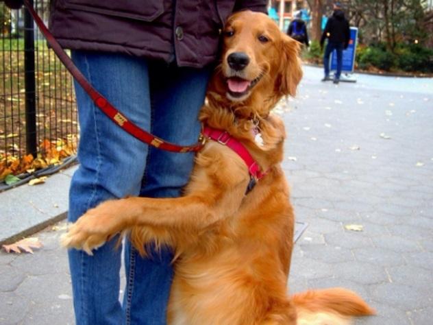 Любящая обнимать прохожих собака прославилась в Сети
