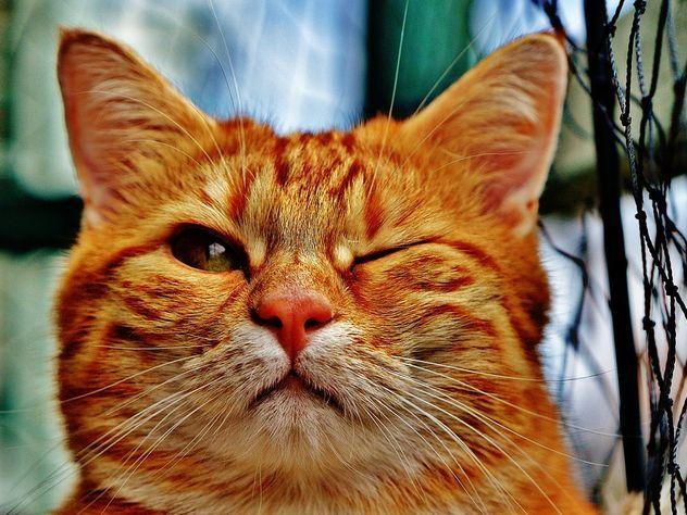 Рыжеватый окрас иотсутствие судимости: вУкраинском государстве возникла вакансия музейного кота