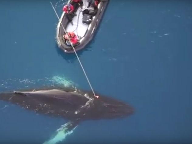 Антарктика глазами кита— необычное  видео