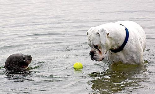 Товарищеская встреча по водному поло кончилась потасовкой