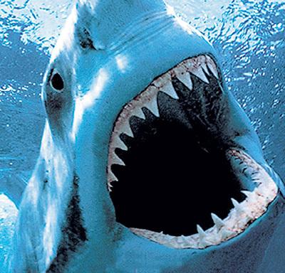 В прошлом купальном сезоне в Приморье покалечила трёх человек большая белая акула