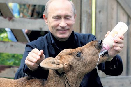 В. В. ПУТИН покормил лосёнка Лушу в Национальном парке «Лосиный остров» (июнь, 2010 г.)