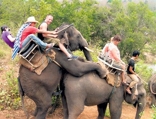 Страсть может настигнуть слона в самый неподходящий момент