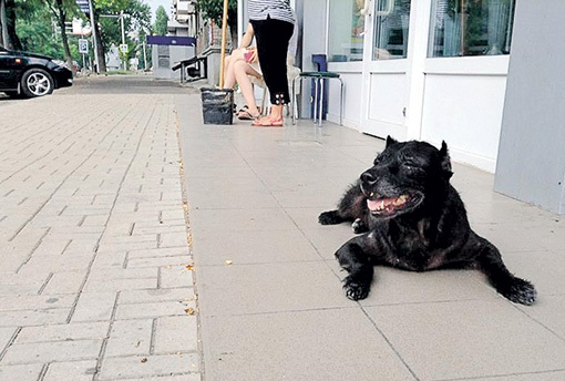 Всеобщая любимица не уходила со своего поста, даже когда заболела... Фото: doneck-news.com