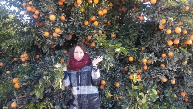 (Фото: Плантация турецких цитрусовых в пригороде Аданы)