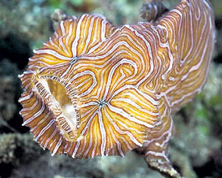 С такой окраской легко затеряться в коралловых рифах