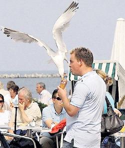 Птицы дерзко выхватывают мороженое из рук