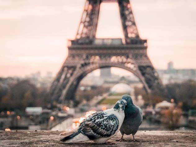 В соцсети показали, как затопило Париж после ливней
